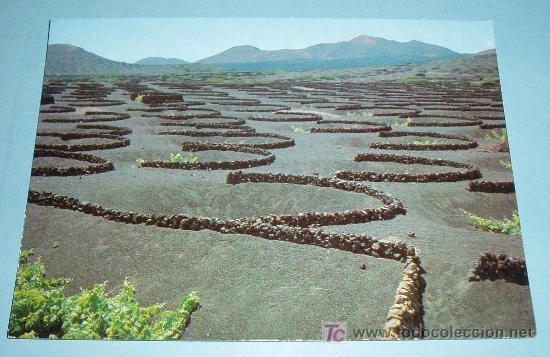 VIÑAS DE LA GERIA. LANZAROTE. SIN CIRCULAR (Postales - España - Canarias Moderna (desde 1940))