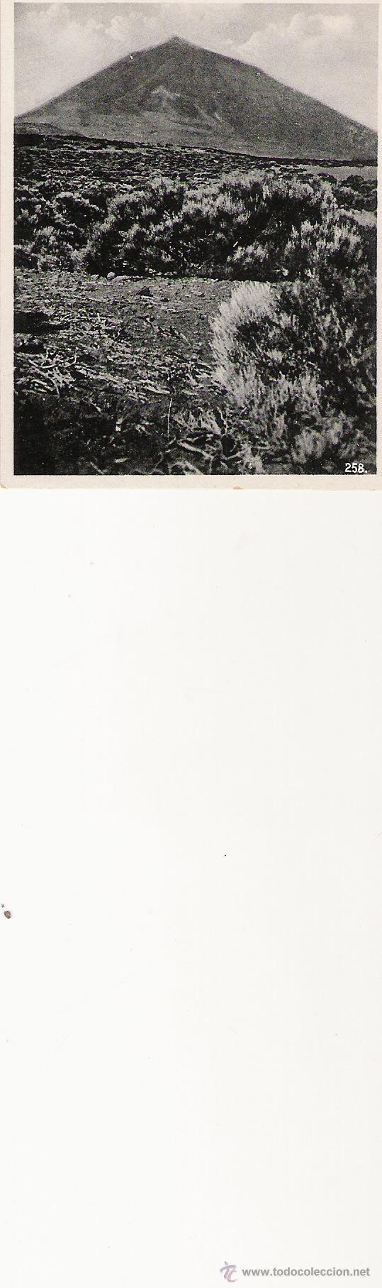 PIK - 258 - FOTO-CENTRAL - STA. CRUZ DE TENERIFE - 9.1 X 7 CM. - (Postales - España - Canarias Antigua (hasta 1939))