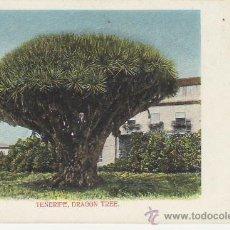 Postales: DRAGON TREE.TENERIFE.POSTAL NO DIVIDIDA.MIRE MAS POSTALES Y COLECCIONISMO EN RASTRILLOPORTOBELLO. Lote 22015938