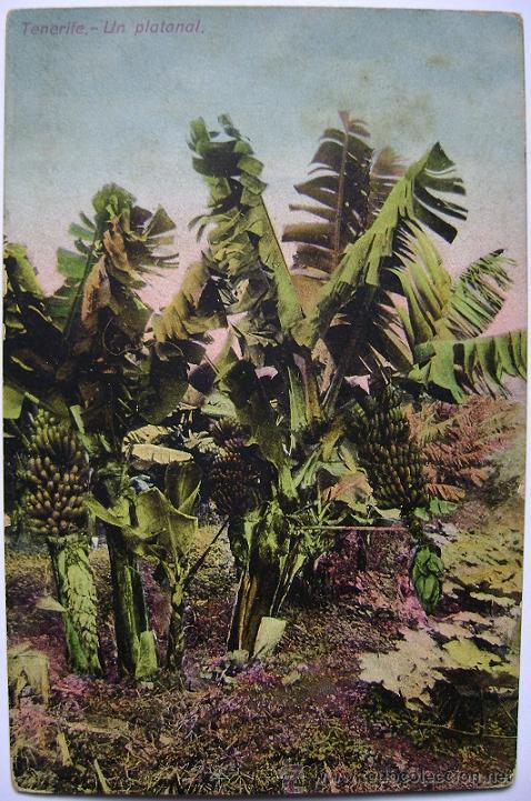 POSTAL ANTIGUA DE ESPAÑA CANARIAS TENERIFE UN PLATANAL (Postales - España - Canarias Antigua (hasta 1939))