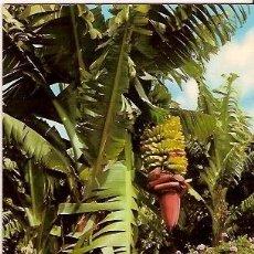 Postales: POSTAL A COLOR 2636 ISLAS CANARIAS FLORES Y PLATANERAS EDICIONES GASTEIZ. Lote 23816245