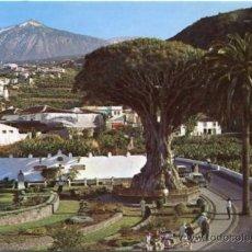 Postales: TENERIFE Nº 243 ICOD DE LOS VINOS EL DRAGO MILENARIO ED. ESCUDO DE ORO NUEVA. Lote 24538078