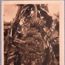 Postales: TARJETA POSTAL DE LAS PLATANERAS DE GRAN CANARIA. Lote 24909388