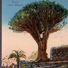 Postales: BUENA POSTAL DE GRAN CANARIA DRAGO DE RODRIGUES BROS, PUERTO DE LUZ 1924. Lote 25803021