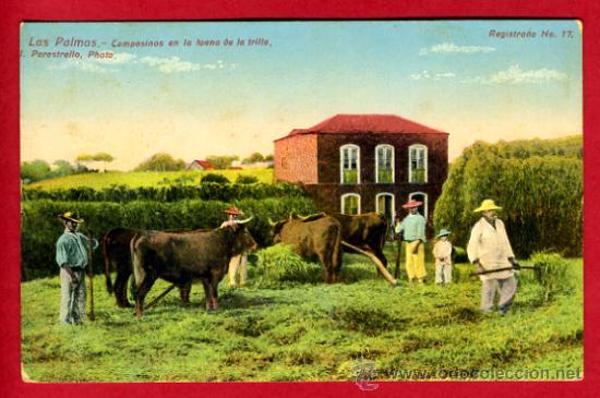 LAS PALMAS, CANARIAS, CAMPESINOS EN LA FAENA DE LA TRILLA, P61103 (Postales - España - Canarias Antigua (hasta 1939))