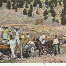 Postcards - TENERIFE. WATERING PLACE.SIN DIVIDIR. RASTRILLO PORTOBELLO PARA COLECCIONSIMO EN GENERAL. - 27671654