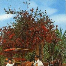 Postales: BUENA POSTAL DE GRAN CANARIA - DETALLE TIPICO - . Lote 27817628