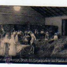 Postales: CANARIAS. TENERIFE EMPAQUETADO PLATANOS. CROMITO 5 X 6,50 CM. SERIE DE ESPAÑA. Nº1438 . HENRY CLAN . Lote 27964522