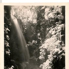 Postales: POSTAL FOTOGRAFICA ISLA DE LA PALMA LOS TILOS Nº 29. Lote 28158197