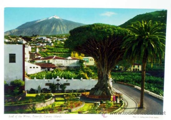 POSTAL TENERIFE ICOD DE LOS VINOS DRAGO ED JOHN HINDE STUDIOS AÑOS 70 SIN CIRCULAR (Postales - España - Canarias Moderna (desde 1940))