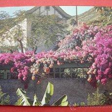 Postales: ISLAS CANARIAS. PAISAJE TIPICO. Lote 29620528