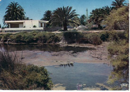 MASPALOMAS. VISTA PARCIAL DEL PALMERAL.GRAN CANARIA. SERIE SABENA JET. (Postales - España - Canarias Moderna (desde 1940))