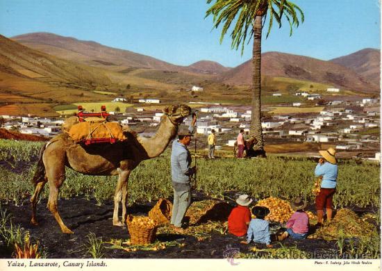 Nº 10742 LANZAROTEEL VALLE DE YAIZA (Postales - España - Canarias Moderna (desde 1940))