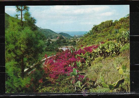 6100. VALLE DE AGAETE (Postales - España - Canarias Moderna (desde 1940))