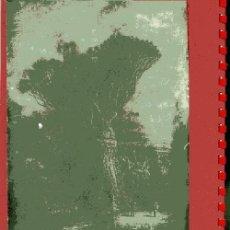 Postales: DRAGO QUE EXISTIA EN EL JARDÍN DE FRANCHY LA OROTAVA TENERIFE. Lote 31337855