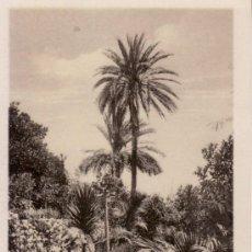 Postales: POSTALES ANTIGUAS. ISLAS CANARIAS. PARQUE DE MR. F. S. BELLAMY. SANTA CRUZ DE TENERIFE.. Lote 31682067