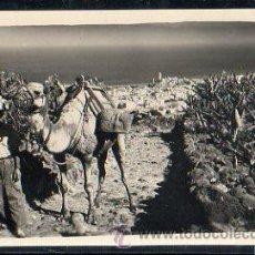Postales: TARJETA POSTAL DE TENERIFE - ELEMENTOS TIPICOS. 44. EDICIONES LUJO. Lote 32457286