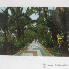 Postales: PASEO DE PALMERAS,TENERIFE-CANARIAS T255. Lote 32993387