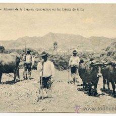 Postales: TENERIFE. AGUERAS DE LA LAGUNA, CAMPESINOS EN LAS FAENAS DE TRILLA. BAZAR FRANCÉS Nº 14. Lote 33353168