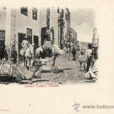 Postales: CAMELS CANARY ISLANDS -.. Lote 33576454