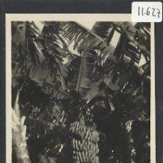 Postales: SANTA CRUZ DE TENERIFE - 9- PLATANERAS - EDICIONES ARRIBAS - (11.627). Lote 34083252