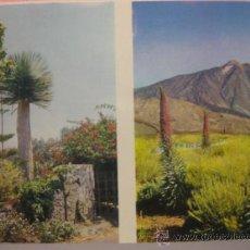 Postales: TENERIFE (ISLAS CANARIAS),MOTIVOS- SIN CIRCULAR T1683. Lote 34087271