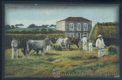POSTAL ANTIGUA DE CANARIAS - TENERIFE, LOS RODEOS CAMPESINOS EN LA FAENA DE LA TRILLA (Postales - España - Canarias Antigua (hasta 1939))