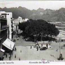 Postales: BONITA POSTAL - SANTA CRUZ DE TENERIFE - ALAMEDA DEL MUELLE - AMBIENTADA - ED. ARRIBAS. Lote 35213729