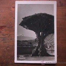 Postales: ICOD, DRAGO DE ICOD, FOTO BAENA, . Lote 35711464