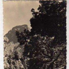 Postais: LA PALMA TENERIFE. PARQUE NACIONAL CALDERA DE TABURIENTE. . Lote 35927427