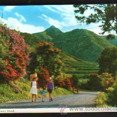 Postales: TARJETA POSTAL DE TENERIFE - VERDADEROS ALARDES DE VEGETACION. 2 CT19. Lote 36361726