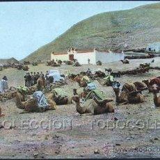 Postales: POSTAL LANZAROTE CANARIAS CAMELLOS . CA AÑO1900 .. Lote 36875031