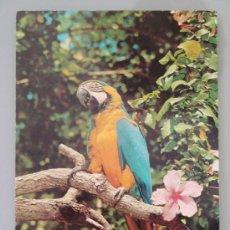 Cartes Postales: POSTAL DE TENERIFE. AÑO 1975. GUACAMAYO, LORO. 1796. . Lote 38483958