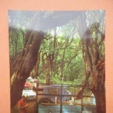 Postales: BOSQUE DEL CEDRO. LA GOMERA. Lote 233556070