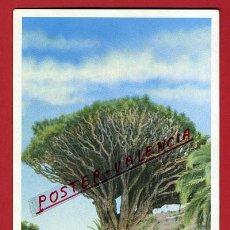 Cartoline: POSTAL, TENERIFE, CANARIAS, DRAGO MILENARIO ICOD, P90552. Lote 135044417