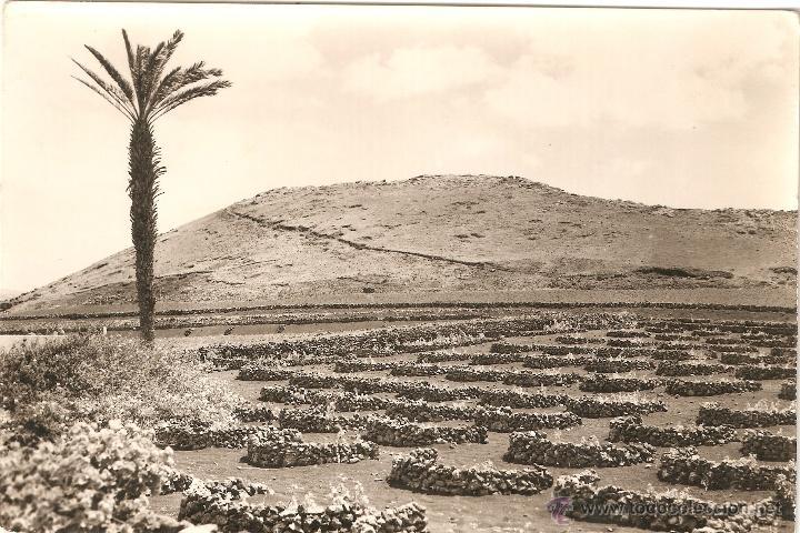 LANZAROTE 1007 VIÑEDOS EN TERRENOS VOLCANICOS EDITA ARRIBAS S. CIRCULAR (Postales - España - Canarias Moderna (desde 1940))