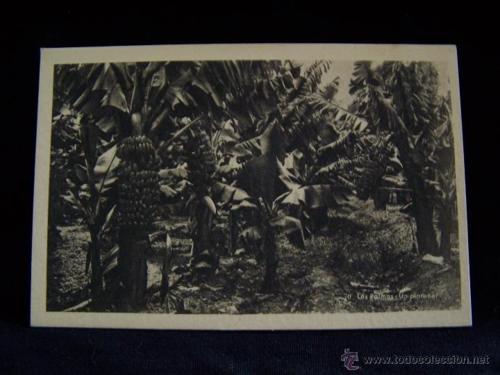 POSTAL FOTOGRÁFICA SIN CIRCULAR ED HAB SERIE Nº 70 UN PLATANAR LAS PALMAS DE GRAN CANARIA (Postales - España - Canarias Antigua (hasta 1939))