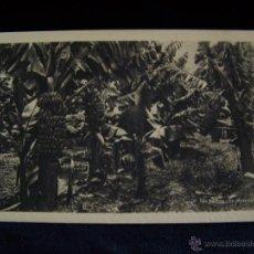Postales: POSTAL FOTOGRÁFICA SIN CIRCULAR ED HAB SERIE Nº 70 UN PLATANAR LAS PALMAS DE GRAN CANARIA. Lote 41506507