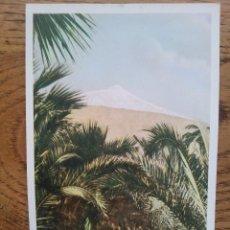 Postcards - POSTAL ANTIGUA DE TENERIFE - PALMERAS Y TEIDE NEVADO AL FONDO - 43022475