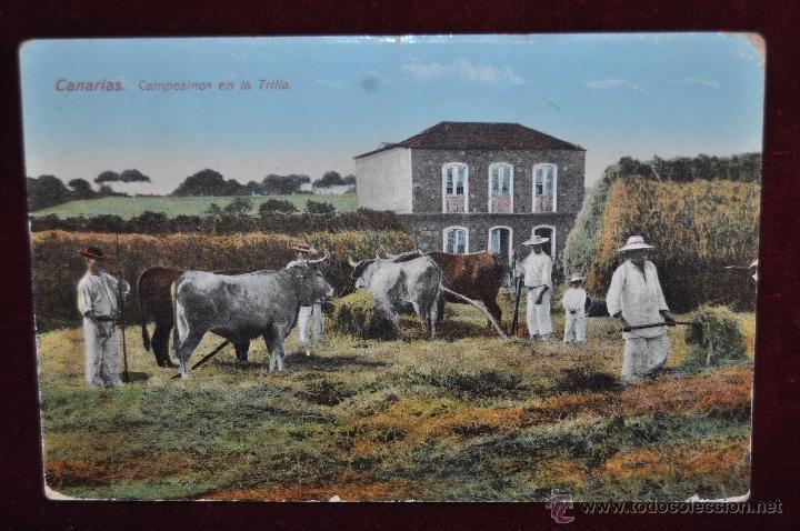 ANTIGUA POSTAL DE CANARIAS. CAMPESINOS EN LA TRILLA. CIRCULADA (Postales - España - Canarias Antigua (hasta 1939))