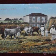 Postales: ANTIGUA POSTAL DE CANARIAS. CAMPESINOS EN LA TRILLA. CIRCULADA. Lote 43246492