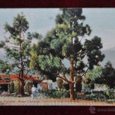 Postales: ANTIGUA POSTAL DE LAS PALMAS. GRAN CANARIA. COSECHA DEL MAIZ EN EL PINAR. CIRCULADA. Lote 43246536