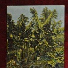 Postales: ANTIGUA POSTAL DE TENERIFE. PLATANALES. SIN CIRCULAR. Lote 43246827