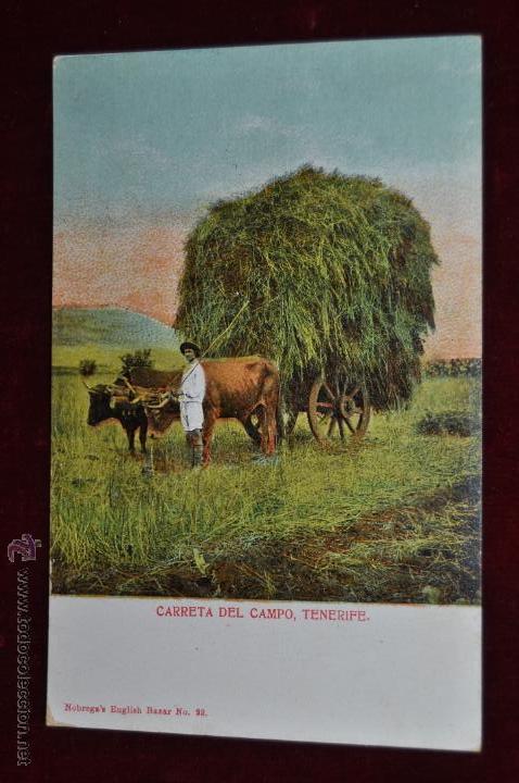 ANTIGUA POSTAL DE TENERIFE. CARRETA DEL CAMPO. SIN CIRCULAR (Postales - España - Canarias Antigua (hasta 1939))