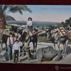 Postales: ANTIGUA POSTAL DE TENERIFE. TRANSPORTE EN CAMELLOS. SIN CIRCULAR. Lote 43246932