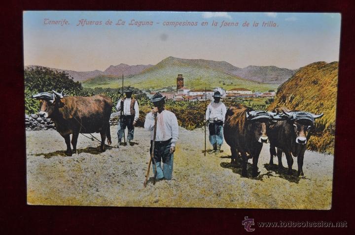 ANTIGUA POSTAL DE TENERIFE. AFUERAS DE LA LAGUNA. CAMPESINOS EN LA FAENA DE LA TRILLA. SIN CIRCULAR (Postales - España - Canarias Antigua (hasta 1939))