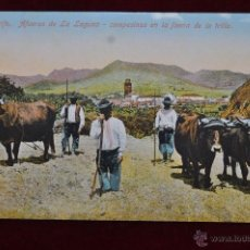 Postales: ANTIGUA POSTAL DE TENERIFE. AFUERAS DE LA LAGUNA. CAMPESINOS EN LA FAENA DE LA TRILLA. SIN CIRCULAR. Lote 43247131
