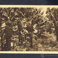Postales: POSTAL DE LAS PALMAS: UN PLATANAR (ED. BAZAR ALEMAN). Lote 43264938