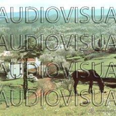 Postales: PUNTAGORDA VISTA PARCIAL ISLA DE SAN MIGUEL DE LA PALMA - Nº 136 - 1973 (XVI) - SIN USAR. Lote 43869911