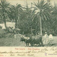 Postales: GRAN CANARIA. BUEYES ARANDO. CIRCULADA EN 1903.. Lote 44472811